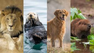 4-animals-personality-test